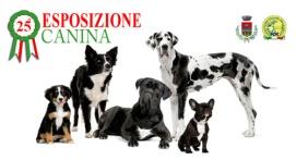 esposizione-canina