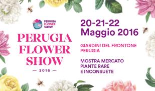 perugia-flower